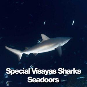 Seadoors produit special visayas shark