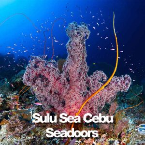 seadoors produit sulu sea transition cebu