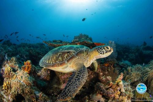 Sea Turtle Seadoors Anda