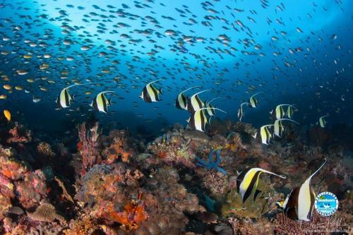 Banners Seadoors