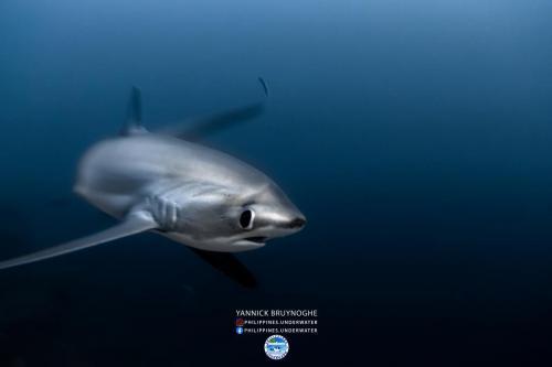 Seadoors Visayas Seascape 10D/9N Febrary 1, 2020 by Yannick